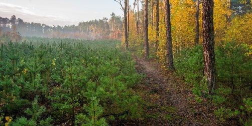 Posadź las - weź pieniądze z PROW